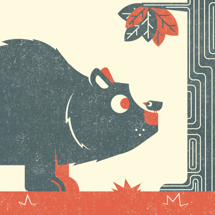 11.Bear-the-jungle-illustration-wood-campers