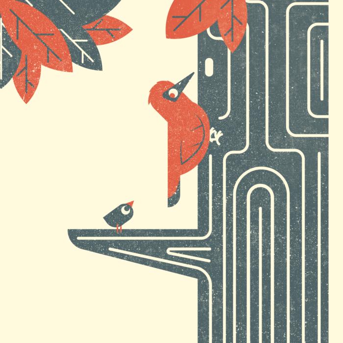 13.Woodpeecker-the-jungle-illustration-wood-campers