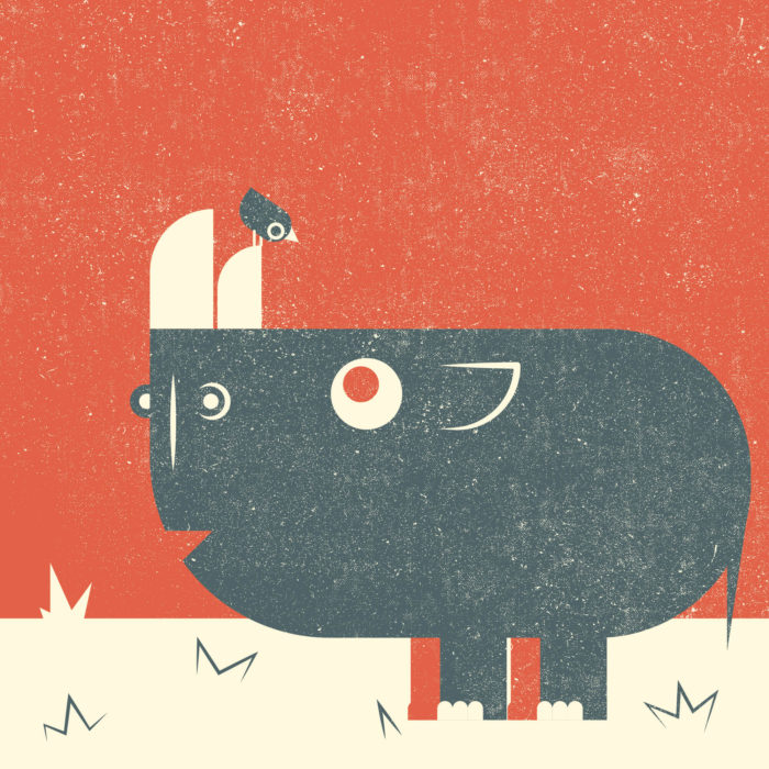 6.Rhino-the-jungle-illustration-wood-campers